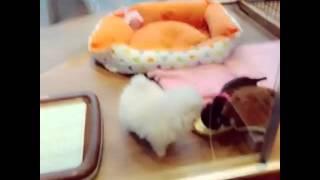 NMB48・AKB48 渡辺美優紀ちゃん.
