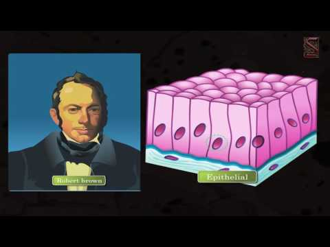 Cell - The basic unit of life (A Significant observation -03)