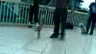 king and mharvin sk8 video