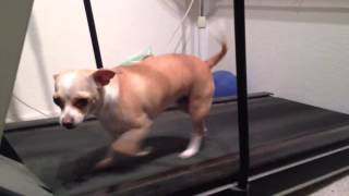 Addie Maryanne Squirt on the treadmill