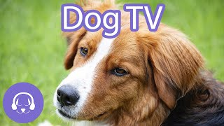 Dog TV: Interactive Video for Dogs   12 Hours of Entertainment