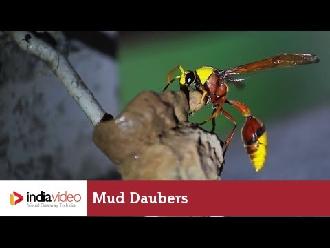 Earthy cottages - Mud dauber style