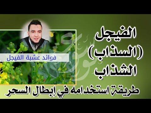 الفيجل أو السذاب في إبطال الأسحار وأذية الجان الراقي المغربي نعيم ربيع Youtube