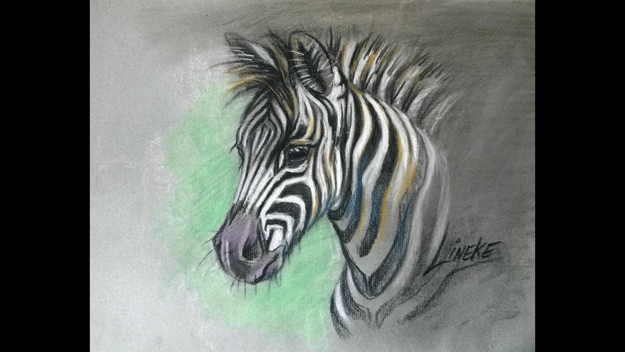 Zebra Veulen Tekenen Met Pastel Potlood Gekleurd Papier