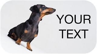 Funny viral dog ads! Try not to laugh!