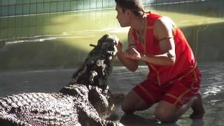 Шоу крокодилов,Паттайя.
