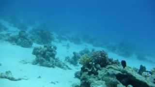 1306.00036 (13 meters deep) Thumbnail