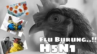 H5N1 (Flu Burung).