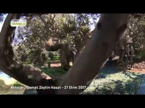 Akhisar Zeytin Hasadı -  27.10.2017 - Vibrope Ve Vibrope Eko