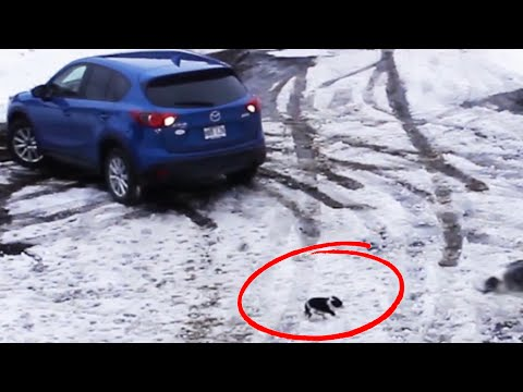 Chase Matthews - Big Dog Saves Little Dog From Getting Hit By A Car