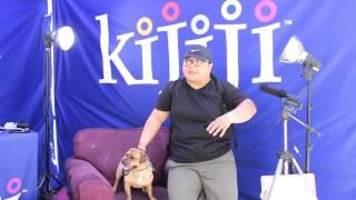 Jack Russell Pug Mix, Biggie Smalls, June 9th 2013