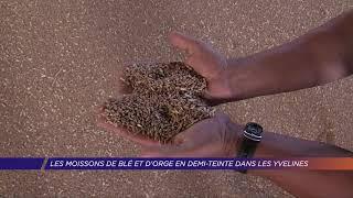 Les moissons de blé et d'orge en demi-teinte dans les Yvelines