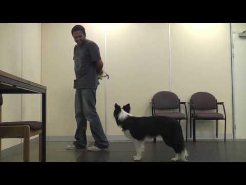 Teaching A Dog To Wear A Muzzle (Muzzle Training)