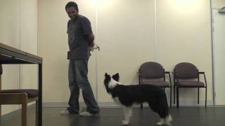Teaching A Dog To Wear A Muzzle (muzzle Training)