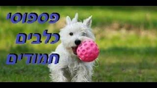 כלבים מטורללים ומצחיקים
