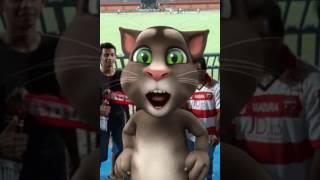 kucing menyanyi lagu madura united bangga mengawalmu hey pahlawan
