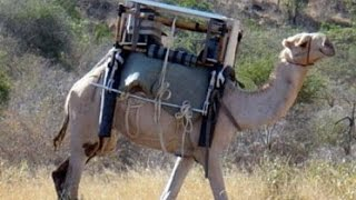 Modern MacGyver: The Camel Fridge