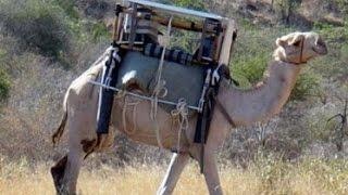 Modern MacGyver: The Camel Fridge