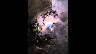 Rain Falls and the Sky Shudders - SunSkyPuddle