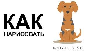 Картинки собака. КАК легко НАРИСОВАТЬ СОБАКУ карандашом(Как нарисовать собаку поэтапно карандашом для начинающих за короткий промежуток времени. http://youtu.be/1FC7rH7b8CY..., 2015-06-25T07:57:17.000Z)