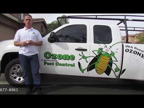 Scorpion Pest Control Apache Junction AZ 480-493-5028 Ozone Pest Control
