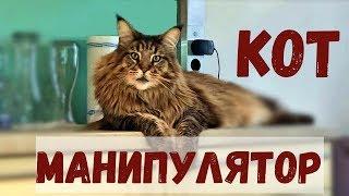 КОТ МАНИПУЛЯТОР, мейн-кун
