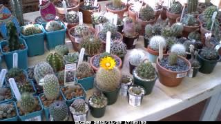 Cactus Timelapse 1
