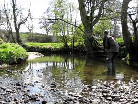 Trout Fishing On A Yorkshire Beck