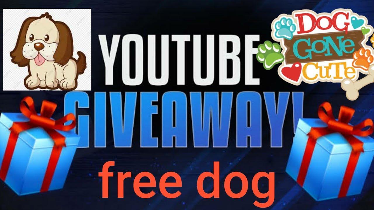 first giveaway/free puppy/free dog/dog adoption in delhi/free dog in mumbai/kerla/banglore/chennai