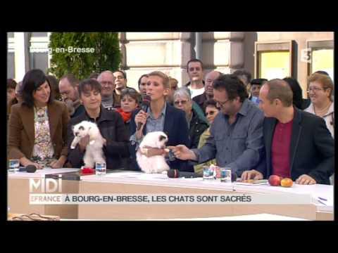 Les Sacrés De Birmanie Du MAS LA FONTAINE Sur France 3- BIRMANS Cats On French TV.mpg