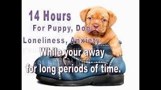 14 Hours For Puppies and Dogs Who Suffer Anxiety, Loneliness