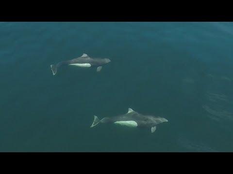 Johnstone Strait to Port McNeill - Cruising Sea Venture - EP. 7