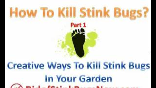 How to kill Stink Bugs Part 1: Rid of Stink Bugs in Your Garden Naturally
