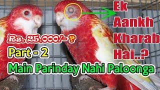 Main Parindey Nahi Paloonga Part-2   only on PBI
