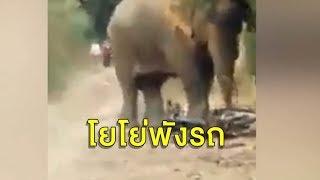 'เจ้าโยโย่' ช้างป่าจอมดื้อฟาดงวง-เหยียบรถ ต้องตะโกนเรียกชื่อ ถึงยอมหยุด