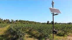 Laser bird deterrent at a Blueberry farm - 99% bird reduction!