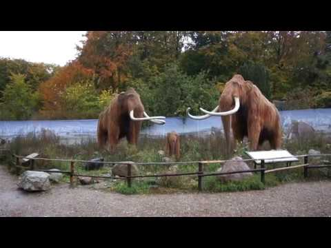 Tilbage til istiden Zoo Aalborg
