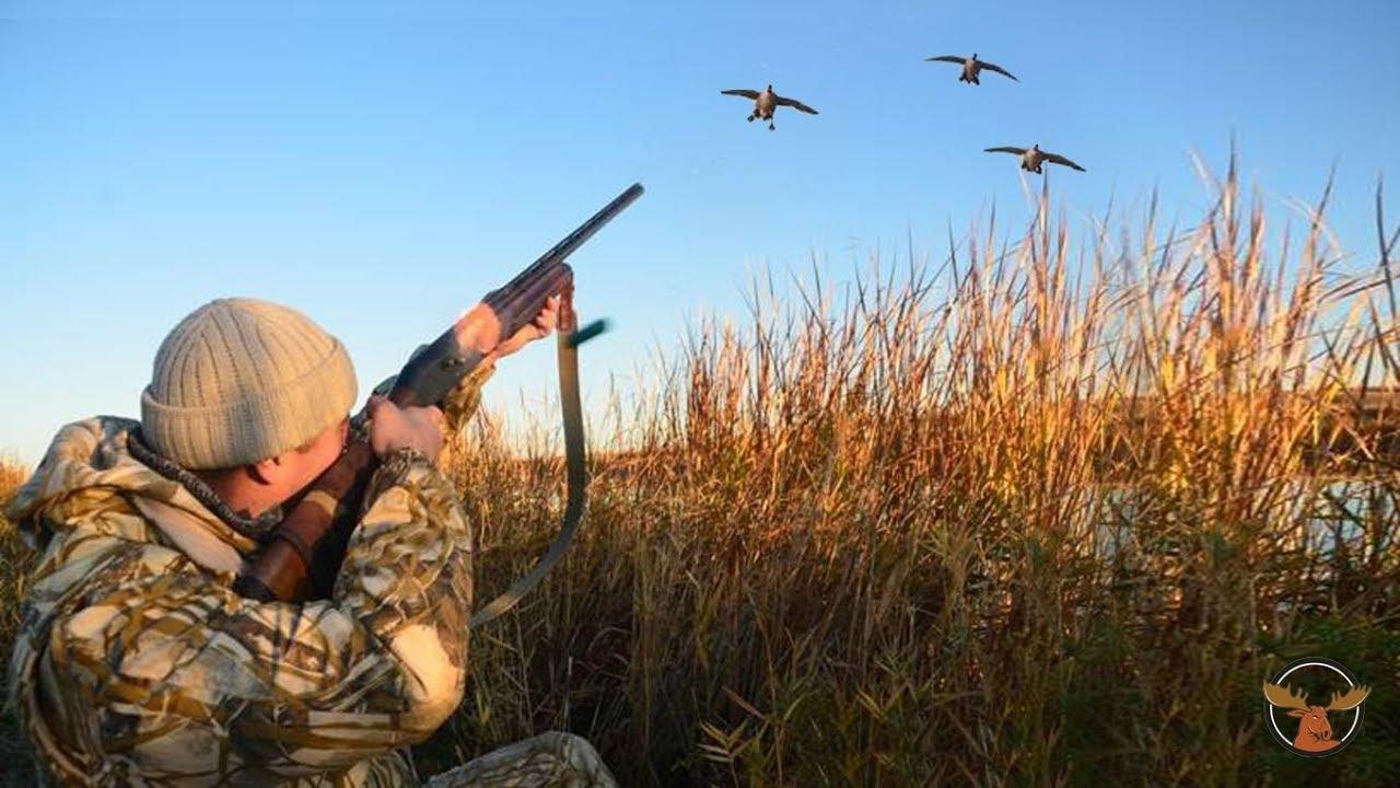 De Superbes Images De Chasse Au Canard Par Hunting World Videos Sur La Chasse Magazine Sentier Chasse Peche