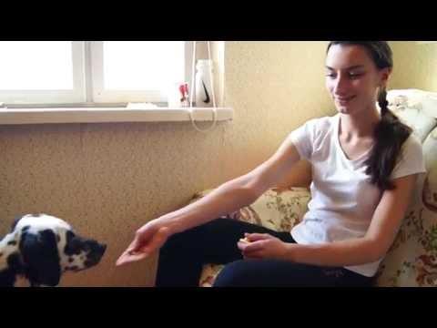 Как Приучить Собаку К Занятиям С Кликером!!!