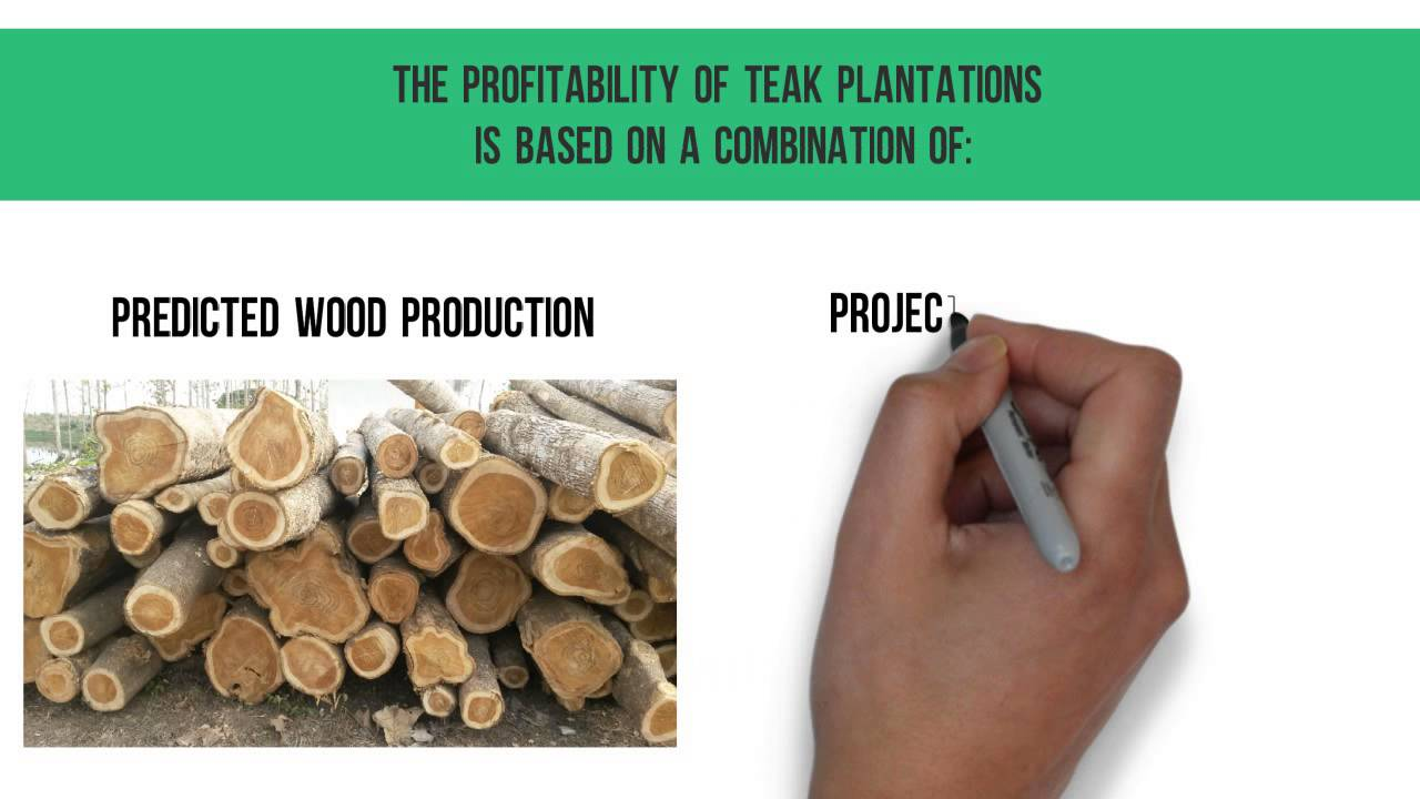 Teak as a safe and profitable investment alternative