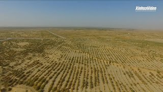 Farmers embrace good harvest on edge of China's largest desert