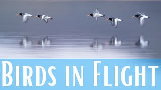Photographing Birds in Flİght | Top 13 Tips for Panning
