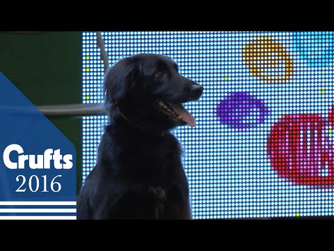 Rescue Dog Agility | Crufts 2016