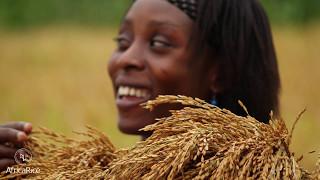 AfricaRice : la science rizicole au service de l'Afrique