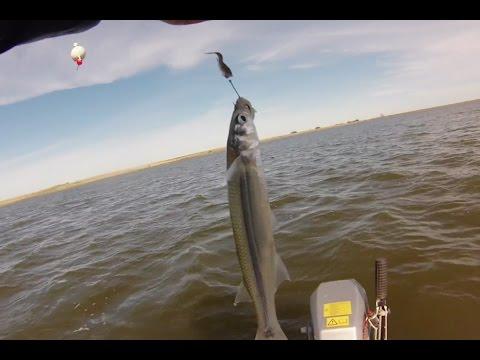Pesca de pejerrey en vivo. 13 pescados en 6 minutos. Laguna Albardón