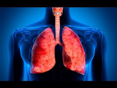 Sistema respiratorio anatomia e fisiologia