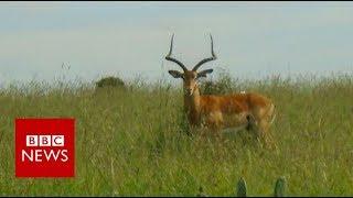 New railway 'threatens Kenyan wildlife' - BBC News