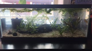 Update on classroom planted tank(s)!