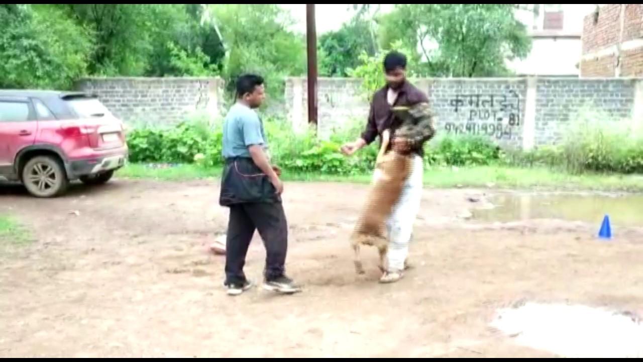 कुत्तों के अटैकसे कैसे करें बचाव | Dogs Training | Real Story |