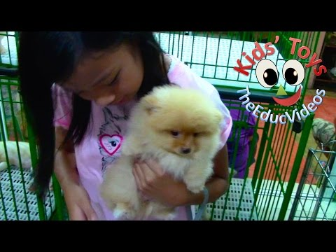 kids'-toys-went-pet-shopping---pomeranian-and-chow-chow-puppies